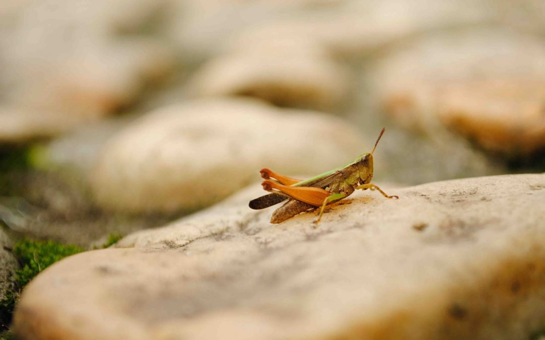 The Grasshopper Complex